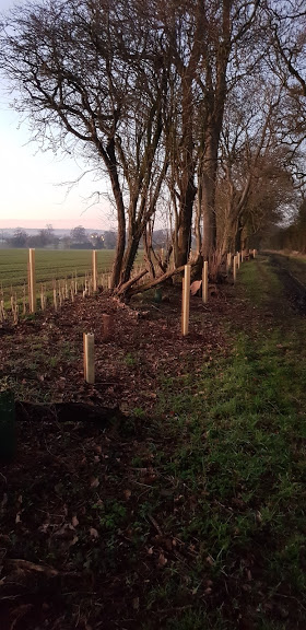 Planting trees and hedges in January