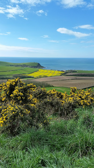 Yellow Gorse and Fields of oil seed rape by the Blue sea of Dorset