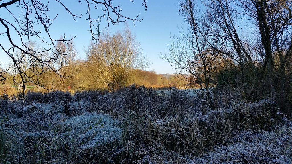 Frost covered plants in the foreground with a sunny distant view