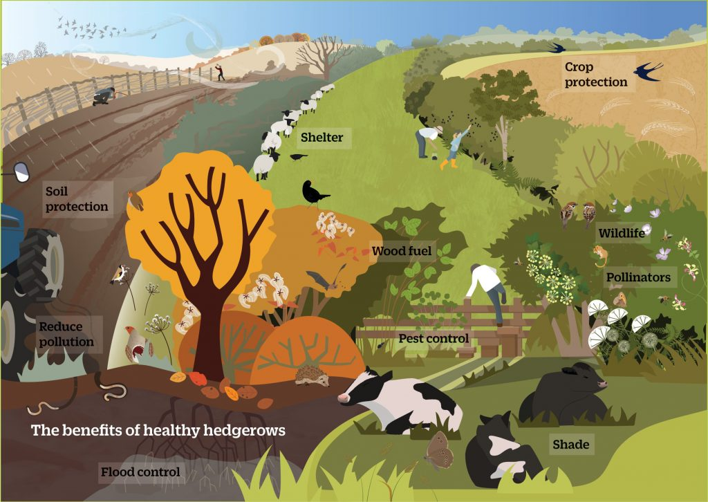 The benefits of heathy hedgerows