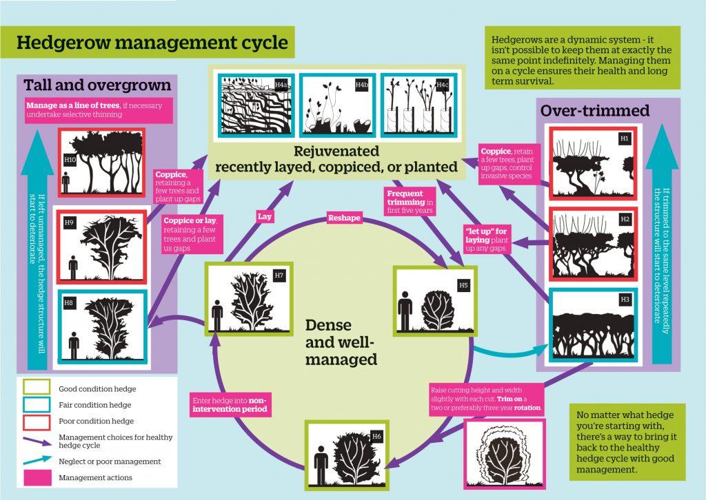Hedge management diagram