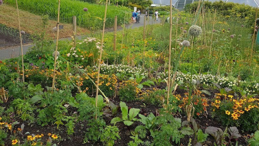 Vegetable Plot at Eden Project